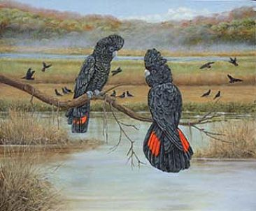 Red tailed black cockatoos - cockatoos by Josephine Smith